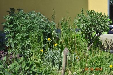 Blumen- und Kräuterbeet